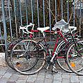 vélo tacheté_4648
