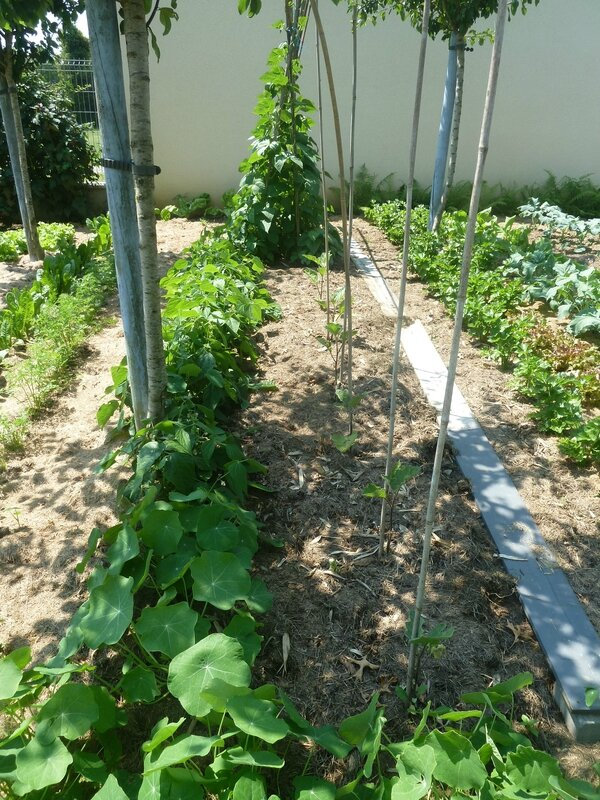 9-jardin le 9 juillet (5)
