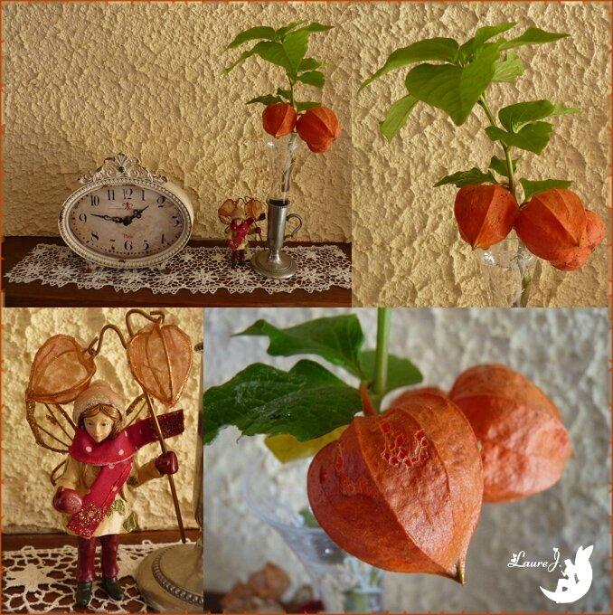 Amour en cage et son elfe au jardin du bonheur mon - Amour en cage comestible ...