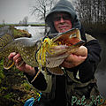 Brochet hollande, dutch pike