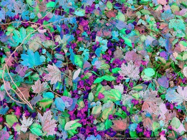 normal_feuilles_mortes_automneblreu