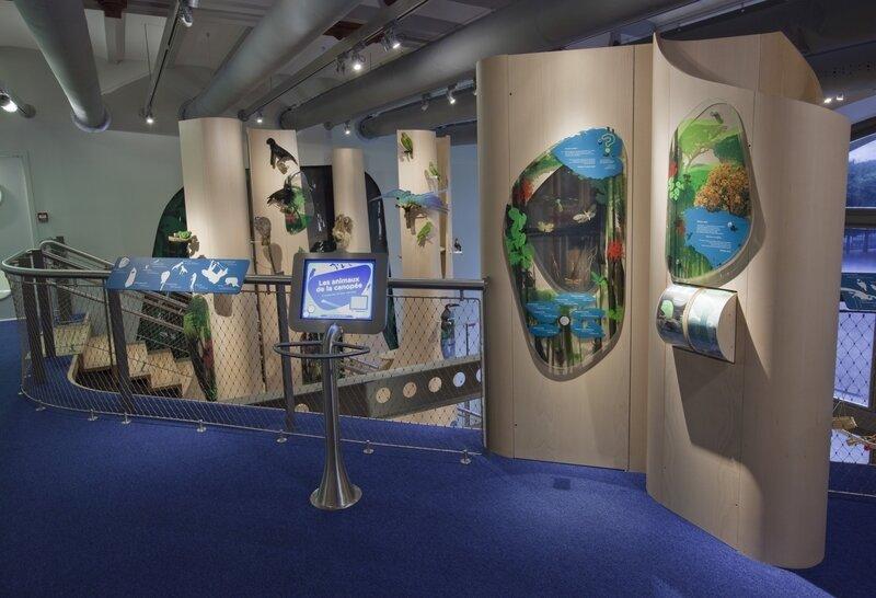 Bernard Faye MNHN Galerie des Enfants forêt tropicale