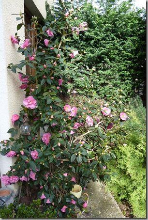 Jardin-20.03.2011 001