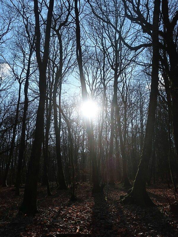 forêt 26 g