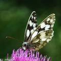 Un papillon en noir et blanc...