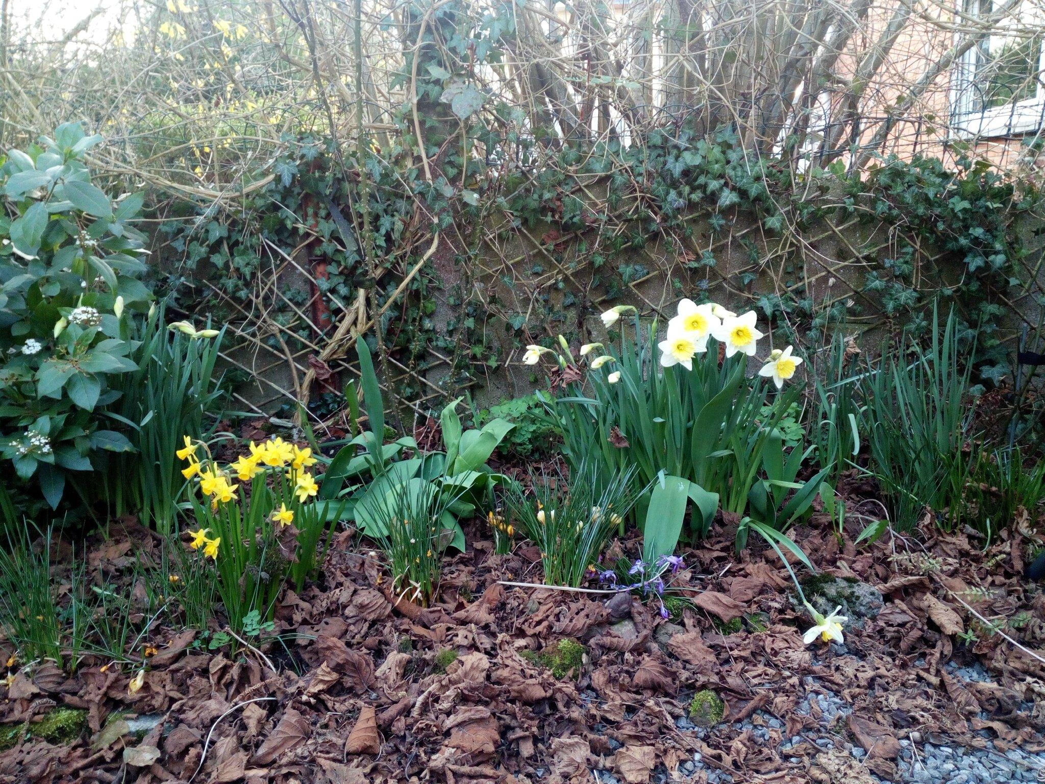 Printemps en vue et nettoyage dans mes revues pascale for Nettoyage jardin printemps