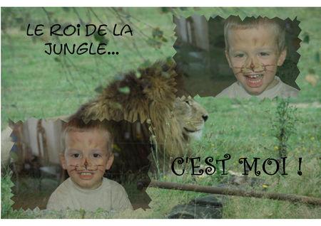 Montage_lion
