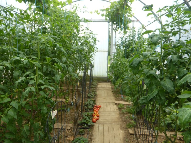 27-tomates (11)