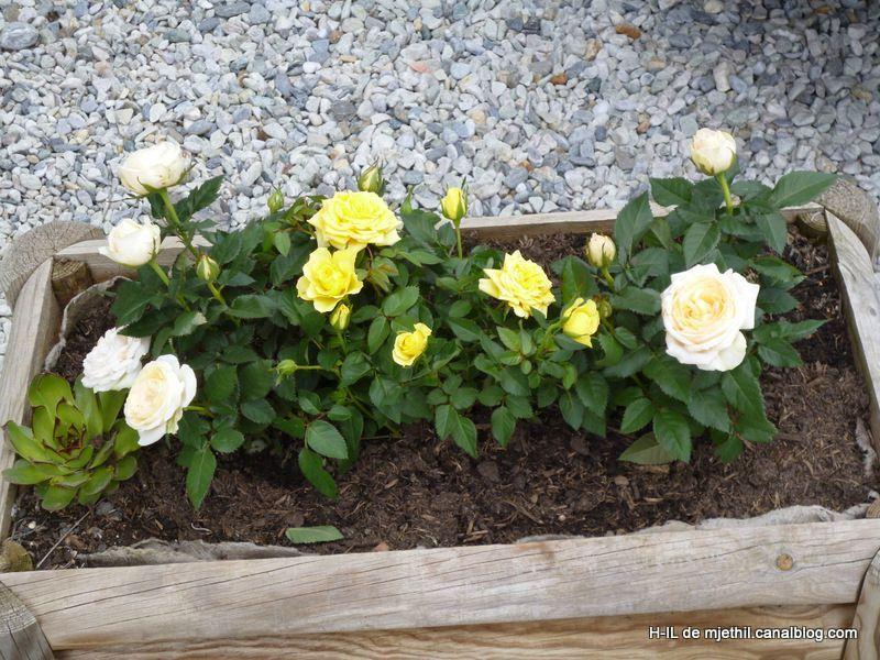 15-Jardin 24 avril 2012 015