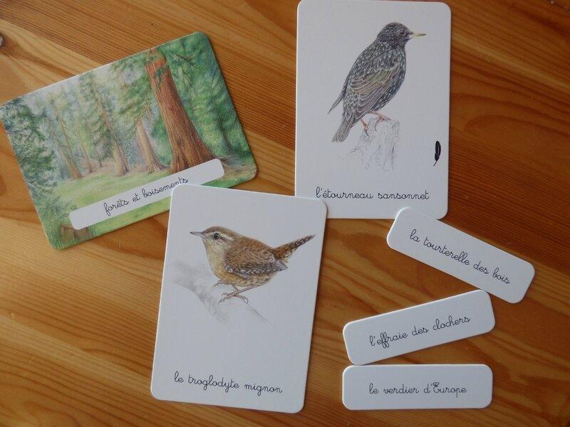 Coffret Montessori oiseaux (7)
