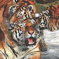 tigreklG1r2xz15o1_500
