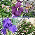 mosa_que_9_fleurs_Asni_res_sur_V_gre