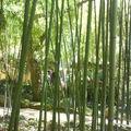 les bambous, il en a partout !