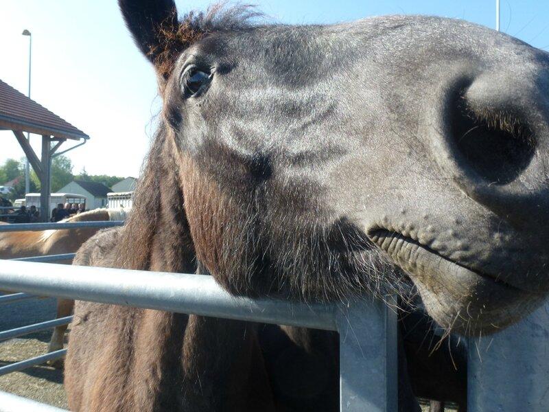 La foire aux chevaux