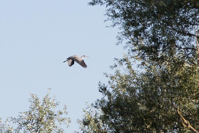 heron ciel