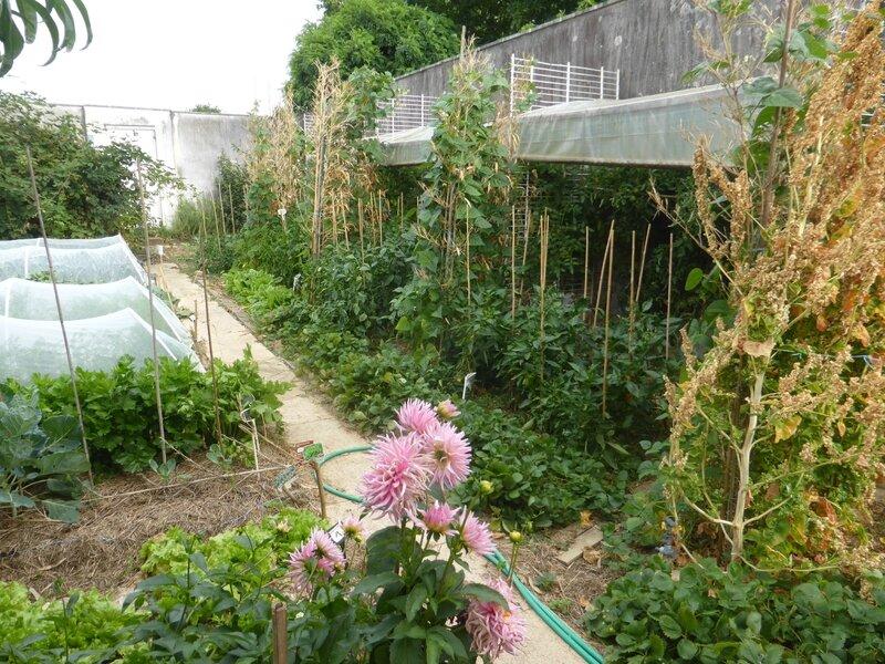 28-potager abri tomates (3)