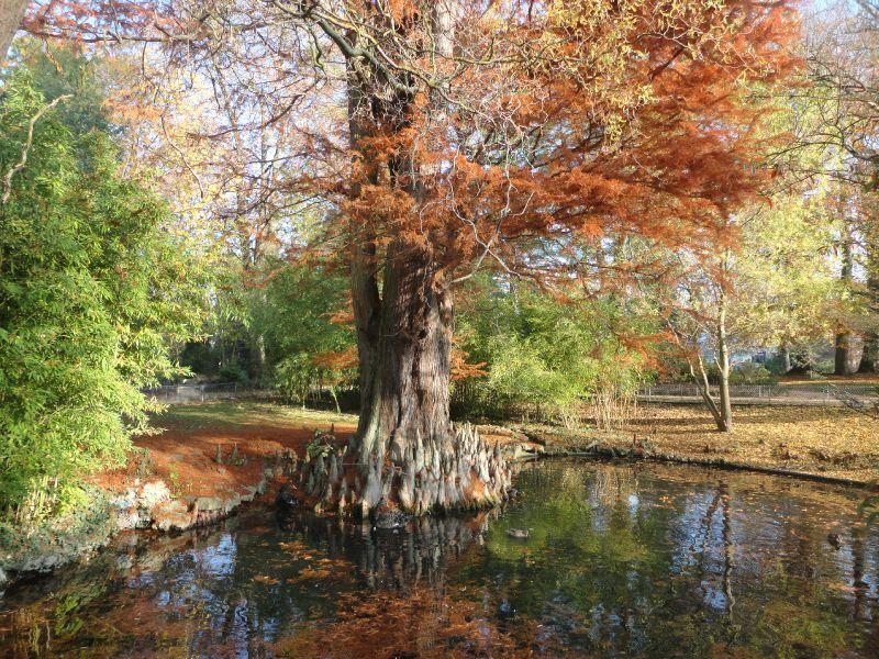 Jardin botanique de metz en automne lechaudrondetaka for Jardin fabert metz