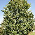 notre arbre au fil des saisons