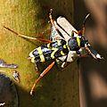 Un insecte attiré par le tas de bois pour la cheminée...