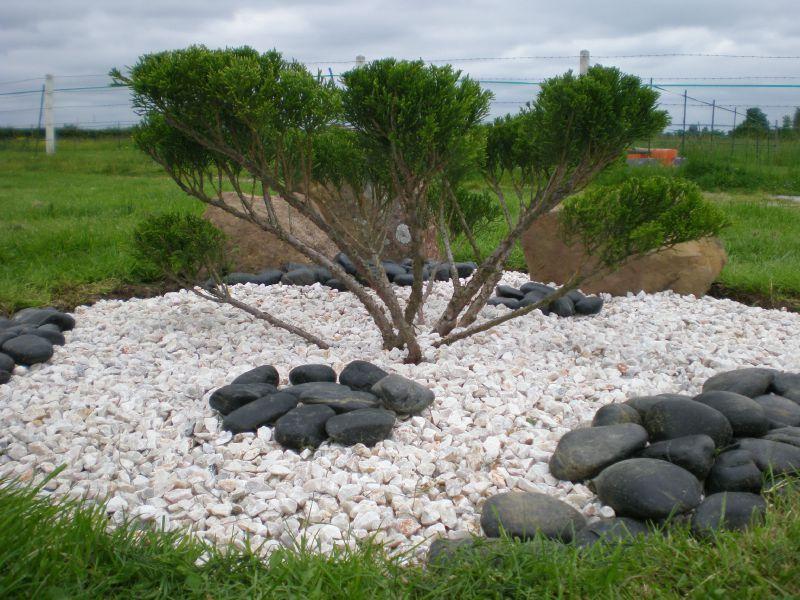 Taille du niwaki de juniperus boutures de reves le jardin de sophie - Taille du buis en nuage ...