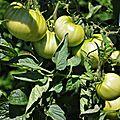 Soupe de tomate, pastèque et thym citronné