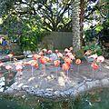 Audubon Park et Zoo (33)