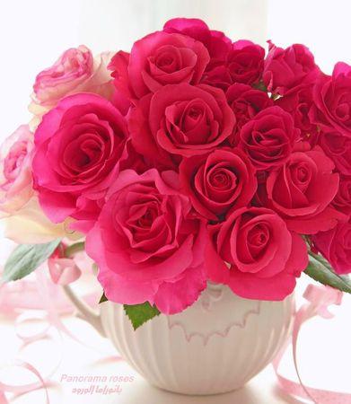bouquet de roses_n