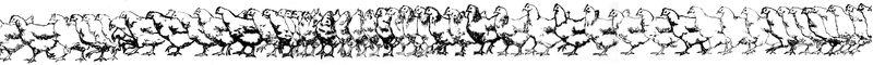 animation_poule_materiau_souple