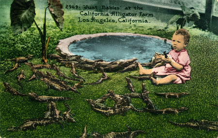 Just_Babies_at_the_California_Alligator_Farm_Los_Angeles_California_2949