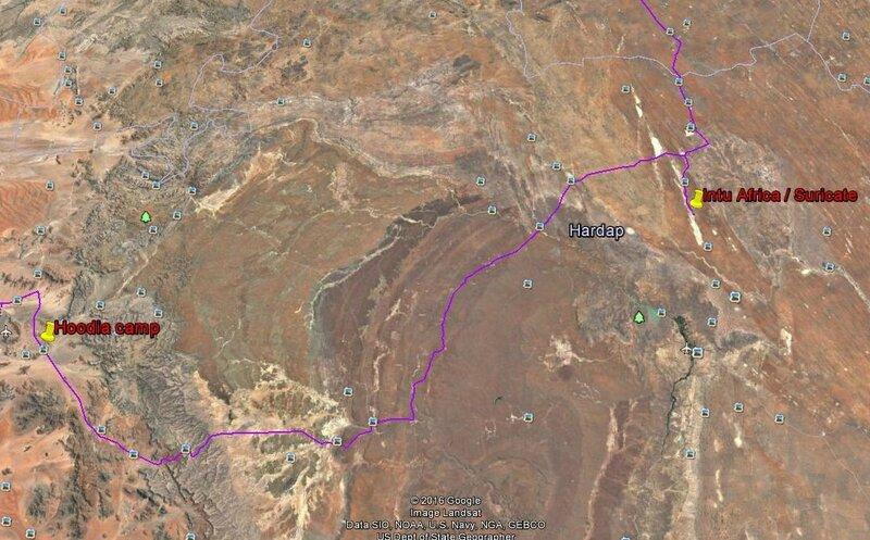 9-b- de Hoodia camp à Hintu Africa -Suricate (2)