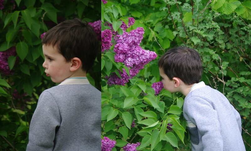 humer le lilas