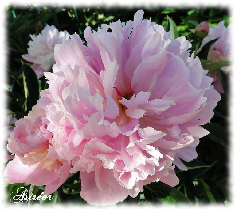 fleurs08