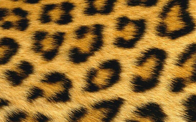 investir-a-lyon-marche-immmobilier-en-peau-de-leopard