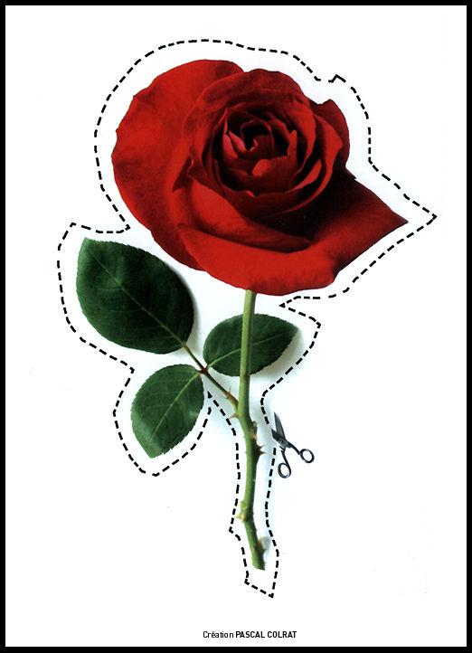 rose_digitale