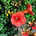 Fleurs, feuilles colorées et chèvres 240916