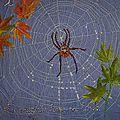 t-toile-d'araignée