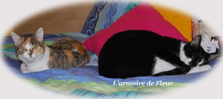 2 chats relax 004 copie