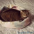 Diy : panier pour chat exprès!