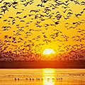 envol-doiseaux-au-coucher-de-soleil