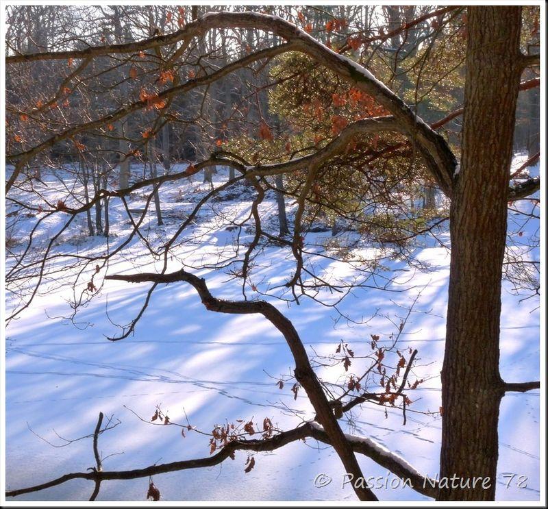 Traces d'animaux dans la neige (26)
