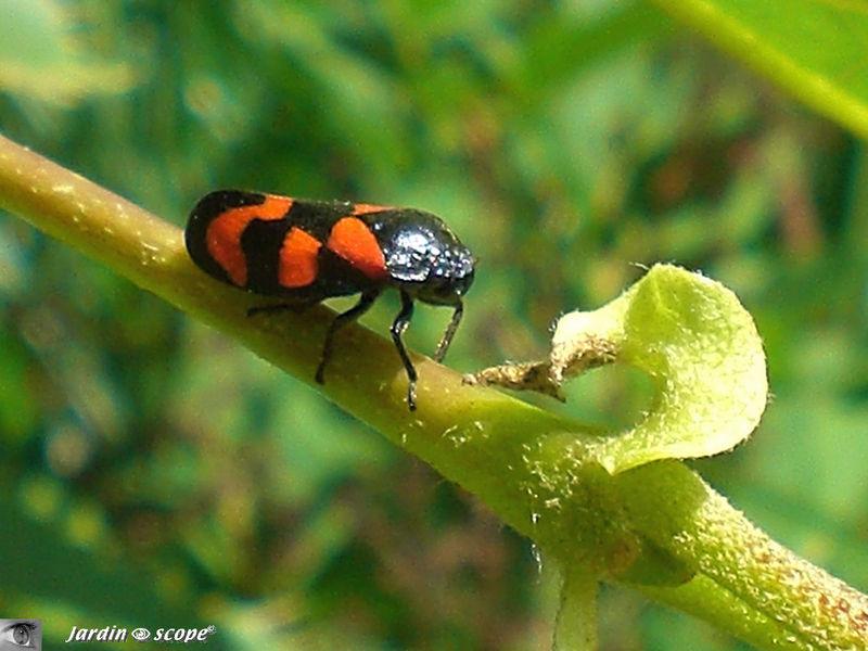 Des insectes miniatures aux couleurs chatoyantes le - Tache de javel sur du noir ...