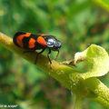Des insectes miniatures aux couleurs chatoyantes…