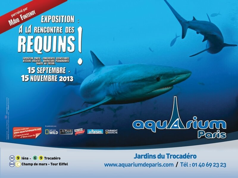 A la rencontre des requins Affiche expo