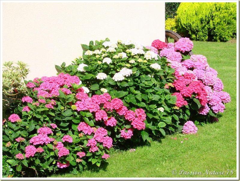 Petite promenade dans notre jardin (10)