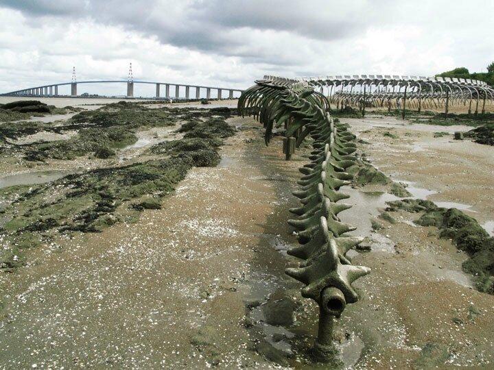 un-terrifiant-squelette-de-serpent-en-aluminium-git-sur-les-plages-de-la-loire193