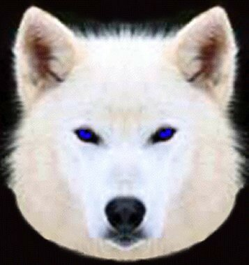 White_20Wolf_20Logo_20Blue_20eyes2