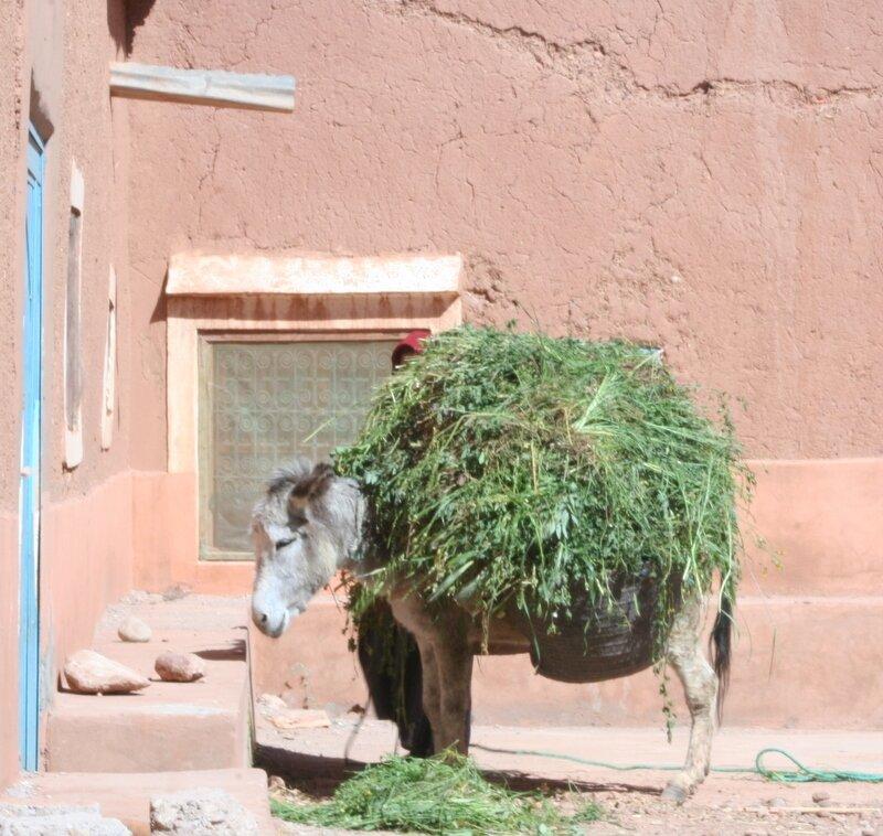 maroc 214