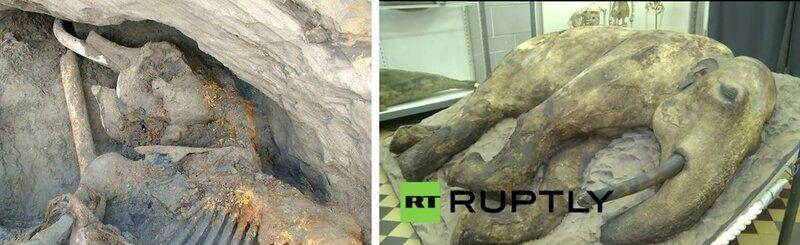 Zhenya Jenya Genia mammouth