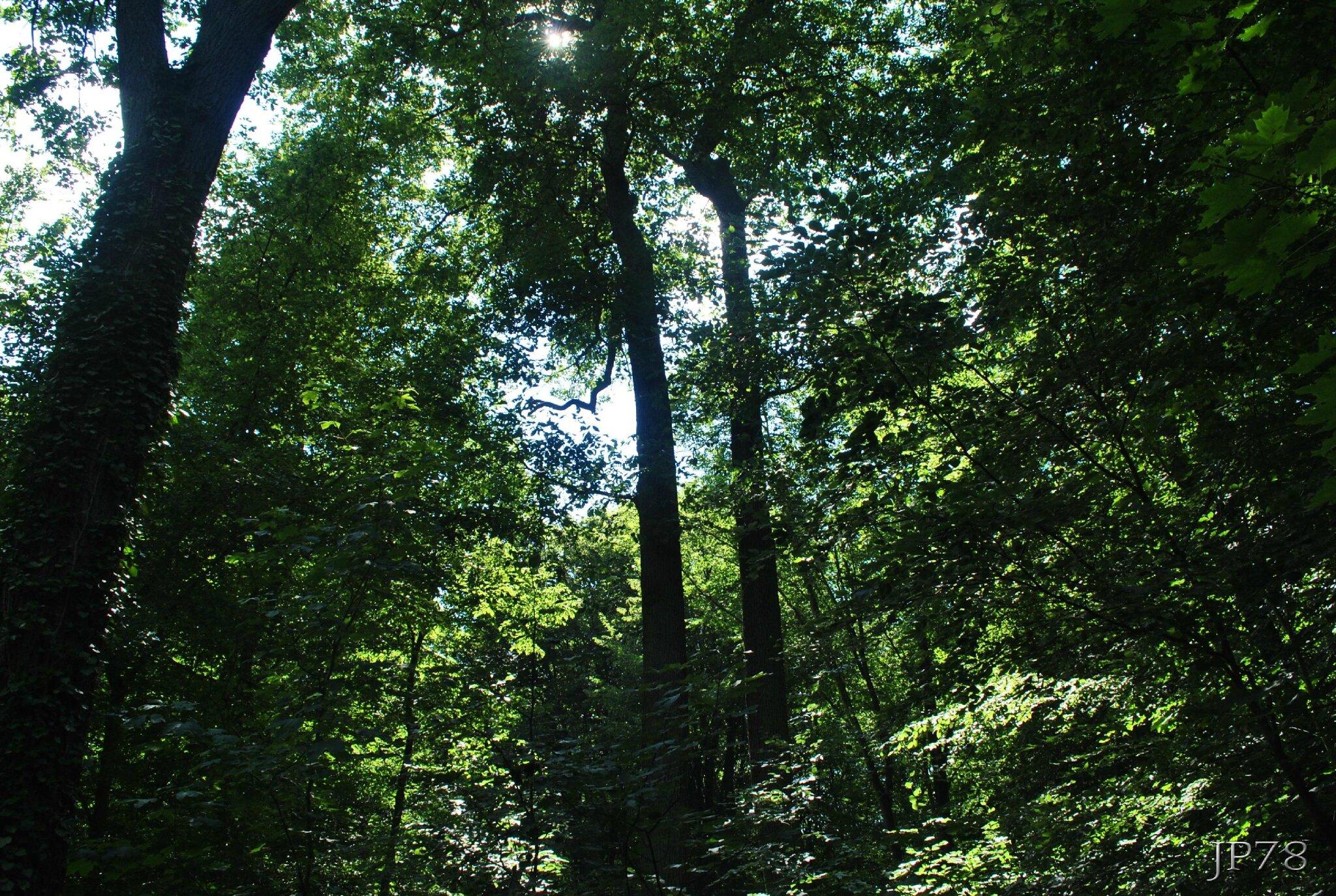 Ballade en forêt de St german en Laye!!!