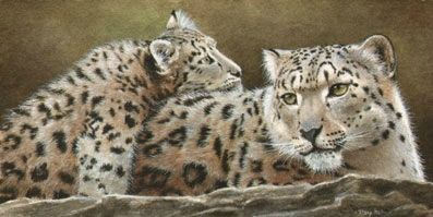tracy hall snowleopards